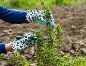 Gardening Liverpool